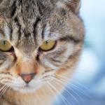 小さいくせにネコはハートが強い