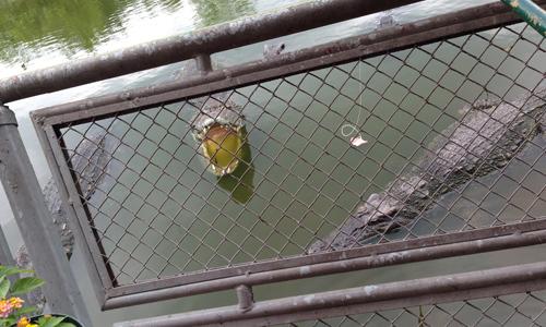 スイティエン公園でワニ釣り