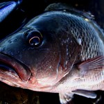 オーストラリア旅行のオススメは釣り