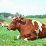 乳製品の怖い話